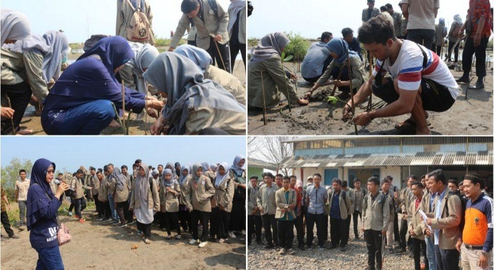 DLH dan Ratusan Mahasiswa Tanam 1250 Mangrove